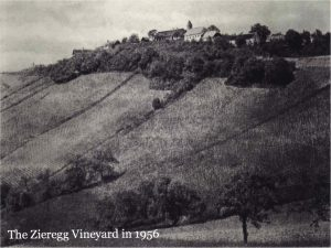 zieregg-vineyard-1956