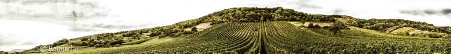 vineyard-reinisch